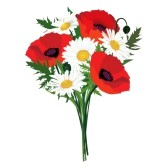 flower-bouquet-clip-art-18050490-flower-bouquet-isolated-chamomiles-and-poppy